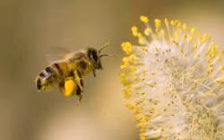 International World Bee Day