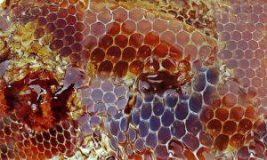 world bee day, honey bee day