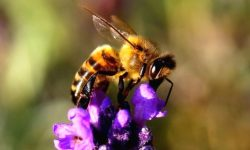 World Bee Day 2021