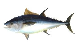 World Tuna Day 2021