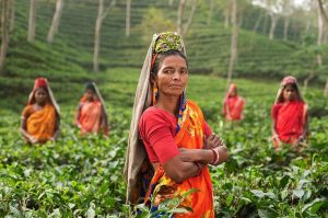 importance of international tea day