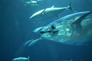 World Tuna Day 2021