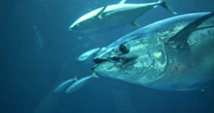 World Tuna Day