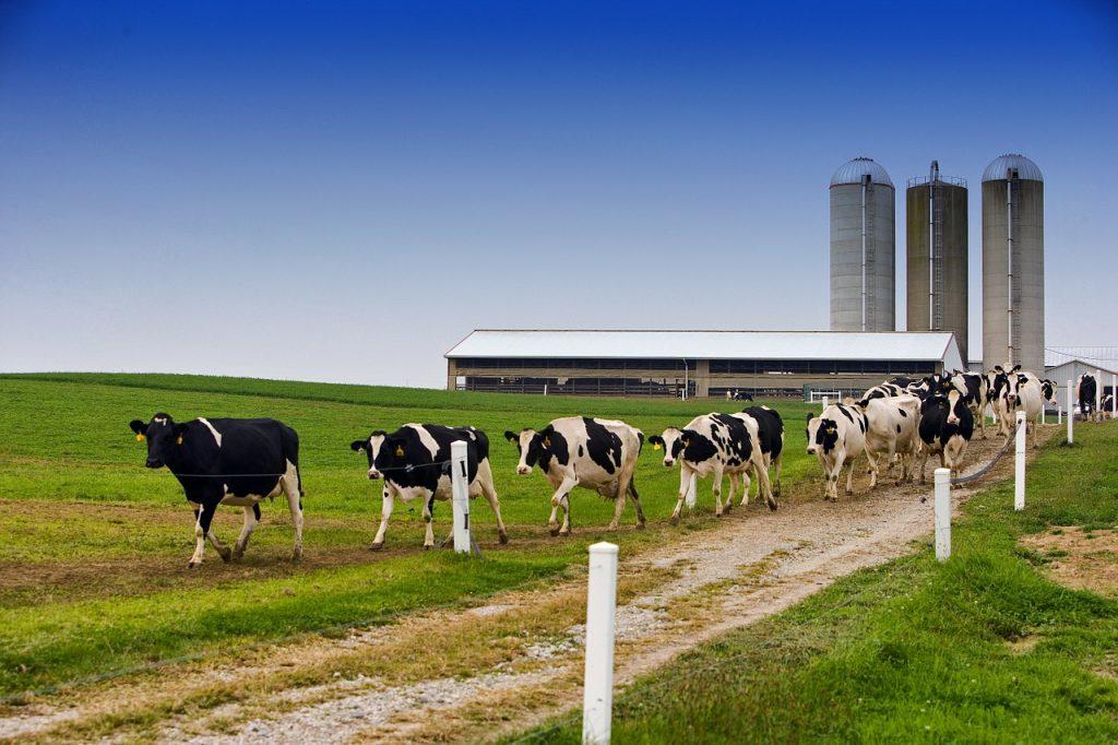 World Milk Day Theme