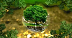 World Environment Day and COVID-19